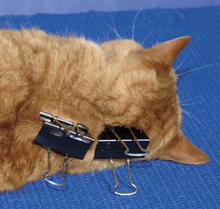 """一只夹子是如何""""冻住""""猫咪的?"""