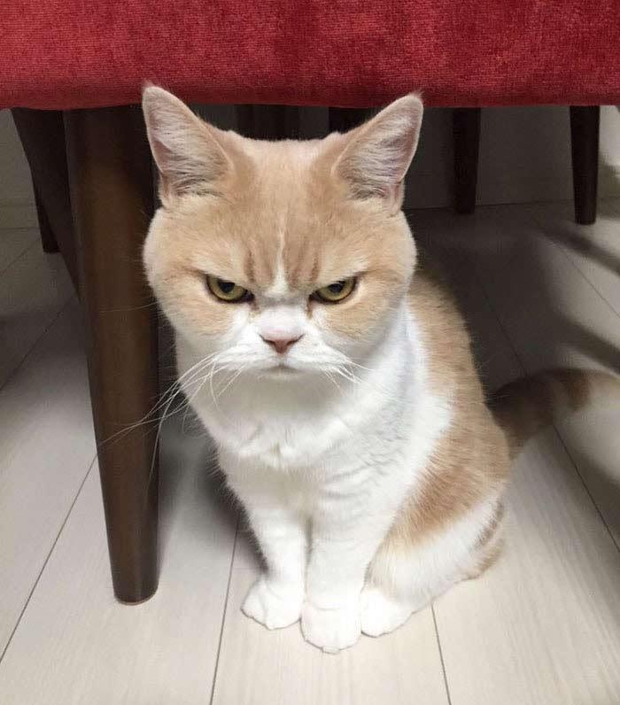 这12只猫的怒气快要冲出屏幕啦!