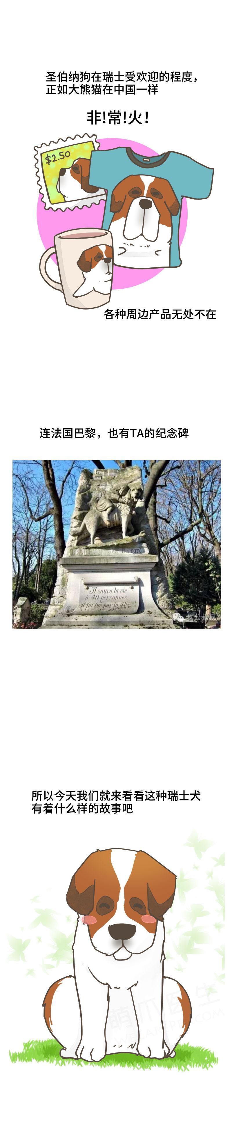 「犬中绅士」、「雪山搜救英雄」,善良勇敢的圣伯纳犬,是瑞士国宝级别的存在