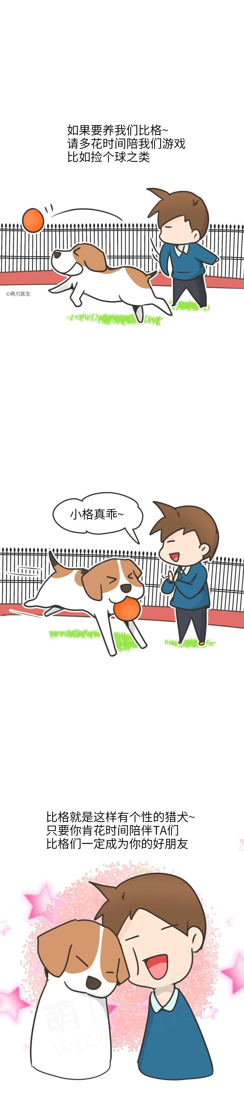 比格犬逼格最高的狗,名字说明了一切!