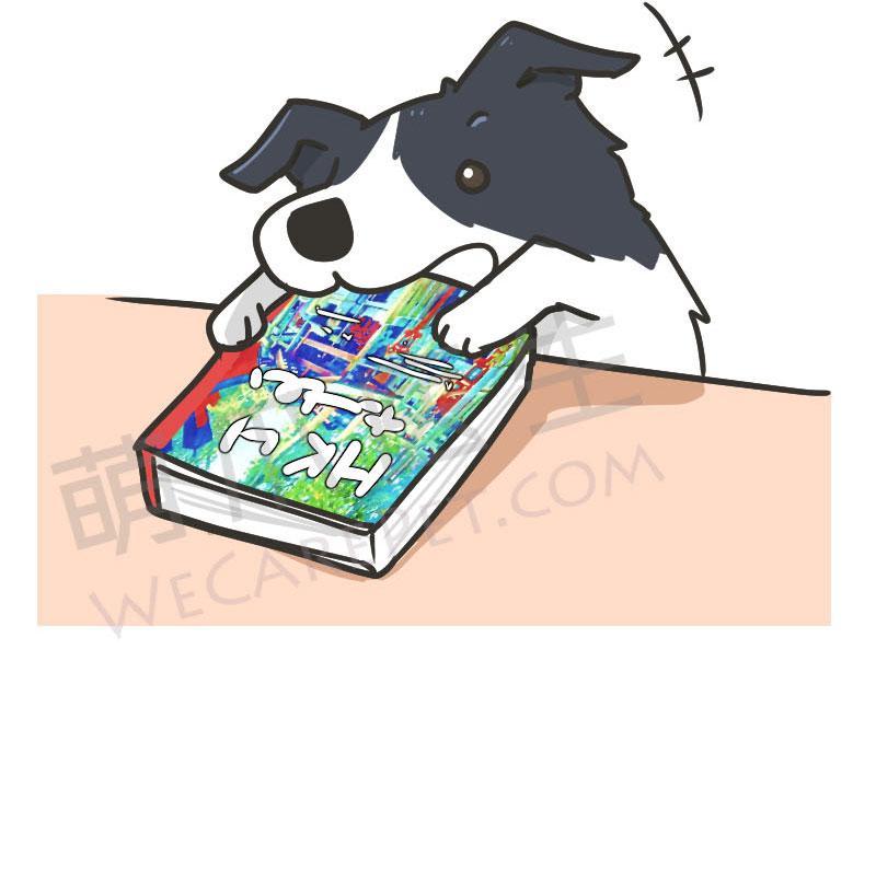 边境牧羊犬,一种智商和精力都能碾压你的狗狗