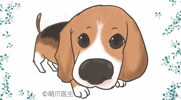 (PIC)狗鼻子的事实:什么才是主人真正应该关心的?
