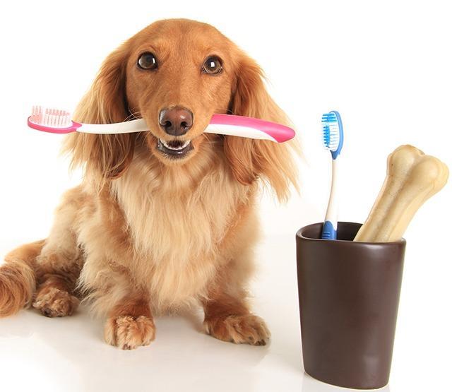 [牛爷]文艺地给狗狗刷牙的方法