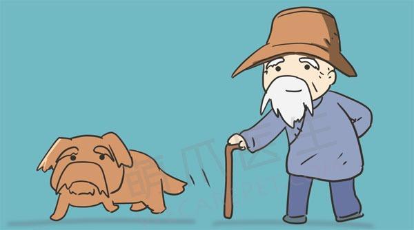 宠物健康微手册:老年篇