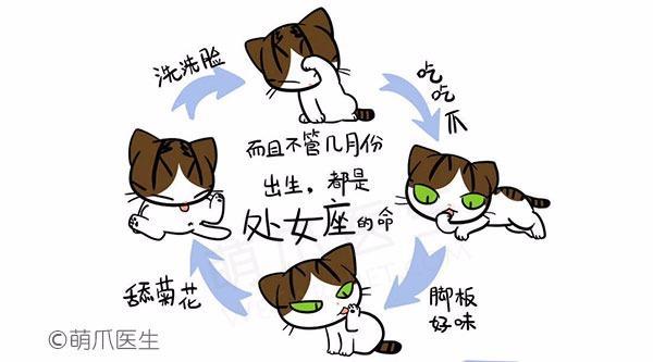 怎样帮猫猫洗澡?