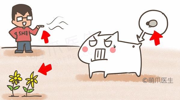 宠物为什么总挠痒?皮肤瘙痒六大原因