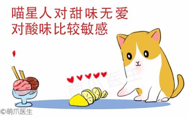 猫咪的小秘密你知道多少?