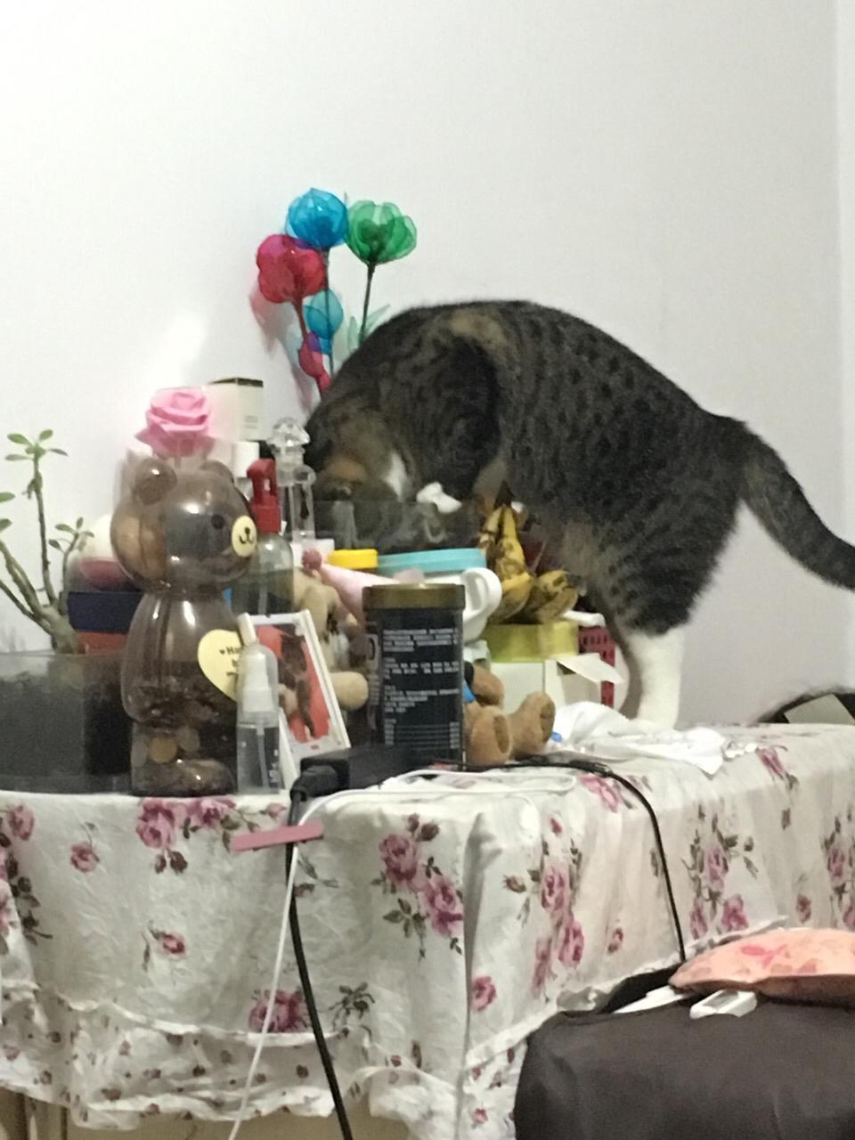 猫总喝鱼缸水