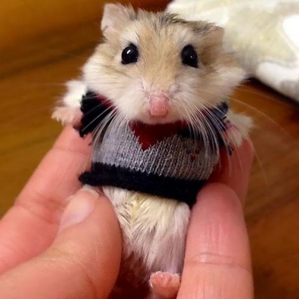 穿上毛衣,这些小家伙准备过冬啦~