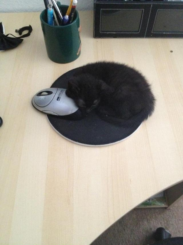 工作和猫咪只能选一个,你选谁?!