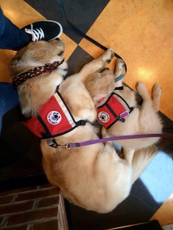 第一天出任务的小小工作犬们