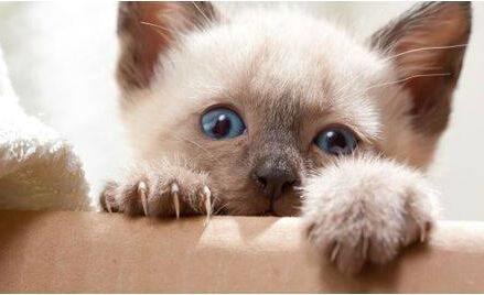 新手主人手册:如何帮猫咪剪指甲?