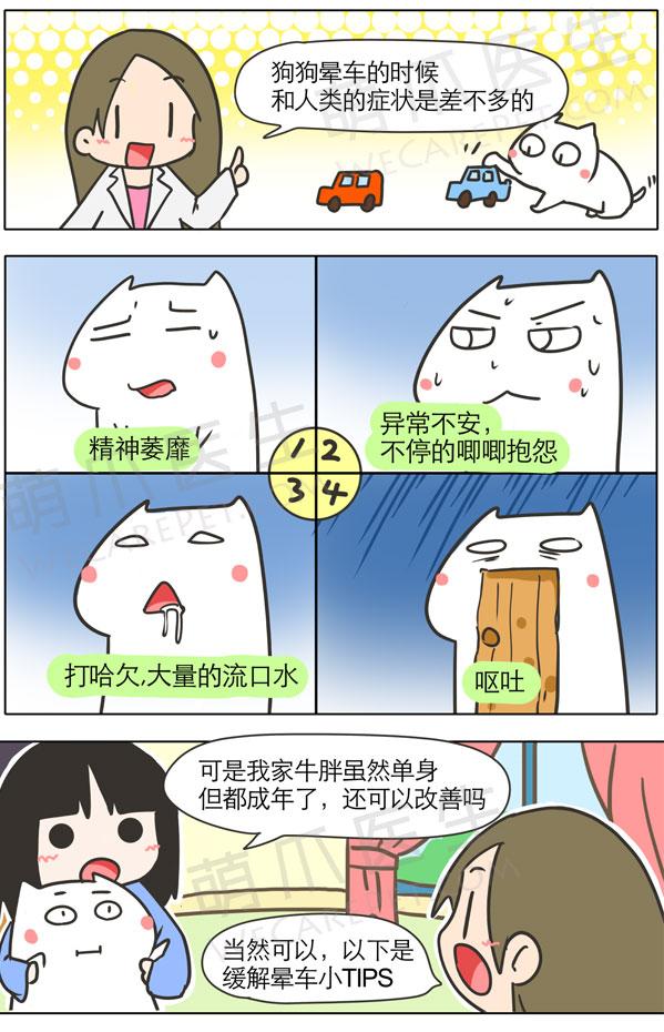 漫画 | 狗狗晕车怎么办?