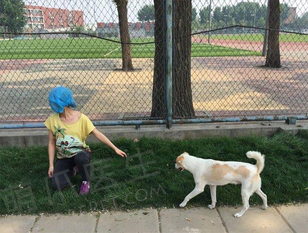 """如何""""礼貌""""地和陌生狗狗交朋友?"""