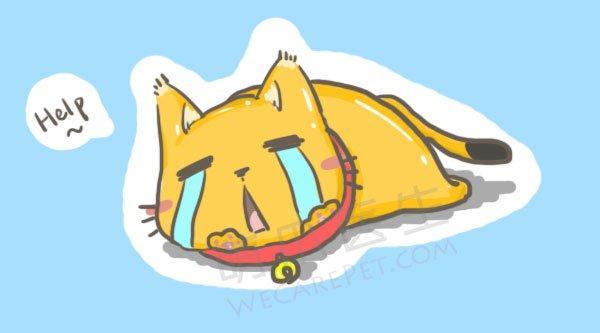 千古议题:可以给猫咪戴项圈、挂铃铛吗?