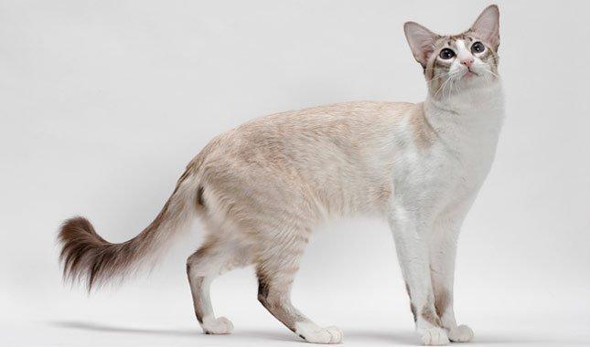 对猫猫过敏怎么办?