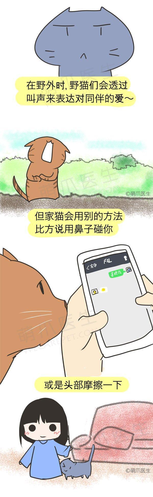 漫画 | 猫狗爱你的方式,你明白么?