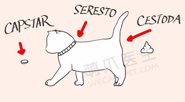 宠物健康微手册:幼年篇