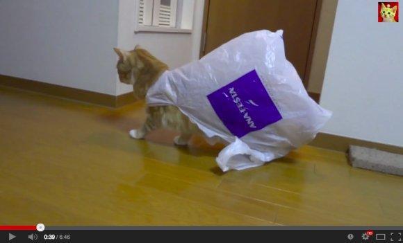 破解猫咪怪异行为之:啃食舔玩塑料袋!