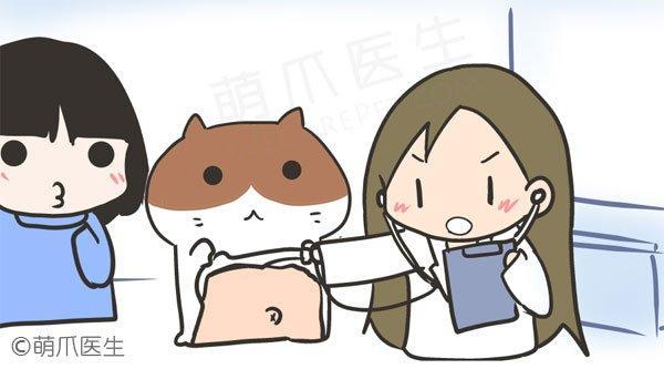 猫咪的定期检查很重要