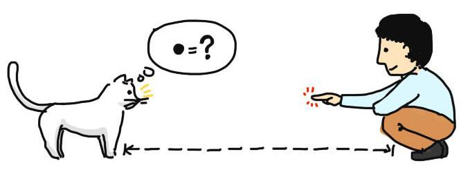 作为两脚兽,如何快速与一只猫混熟?