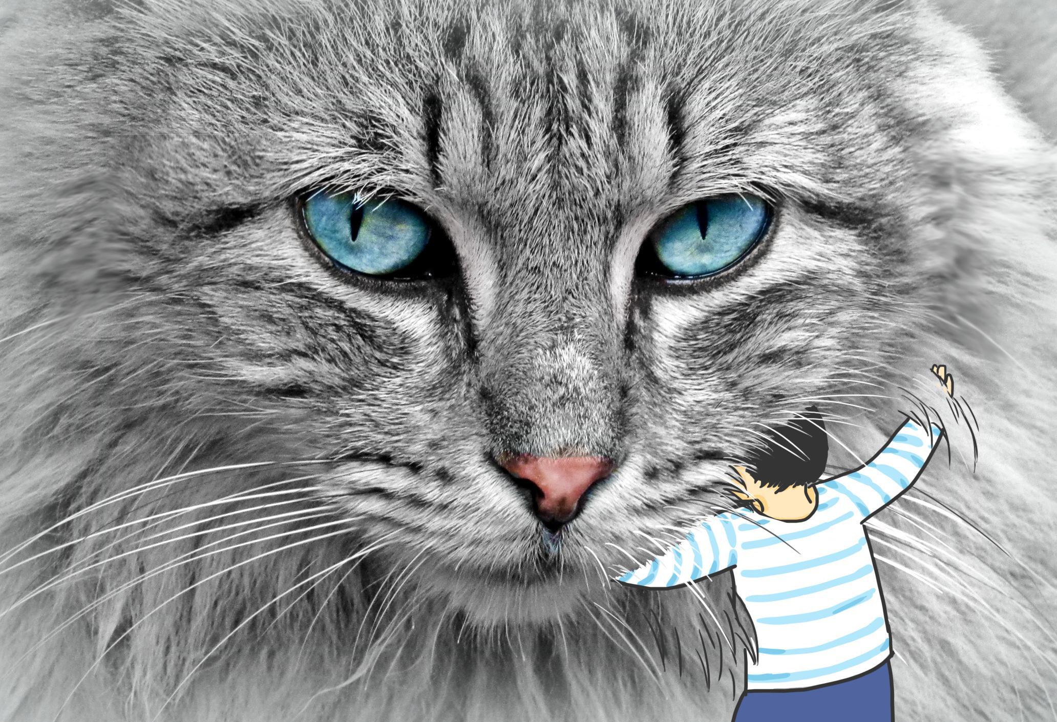 我是行走的猫薄荷吗?为什么我的猫咪直勾勾地盯着我?