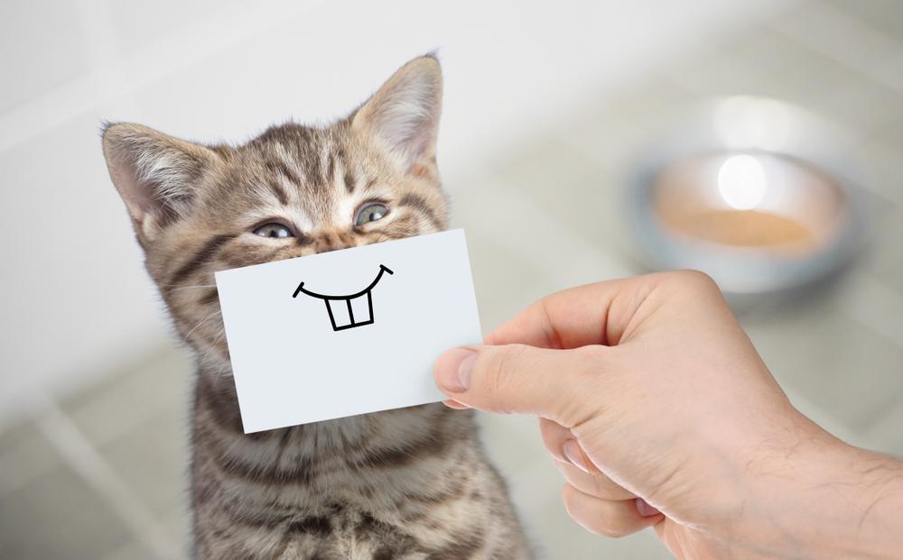 这种无法逆转的猫咪慢性病,究竟该如何预防?
