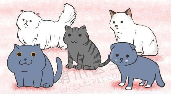 网红萌猫病危,肥胖真的是元凶吗?