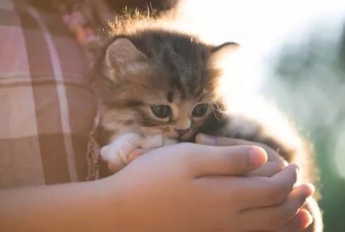 想当合格铲屎官,你知道怎么抱猫吗?