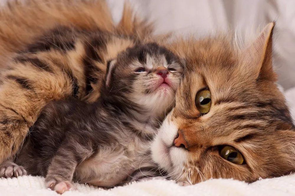 猫狗当爹也是丧偶式教育?