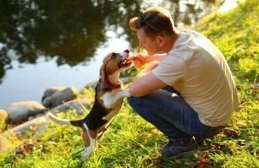 为什么不建议训练狗狗直立走路?