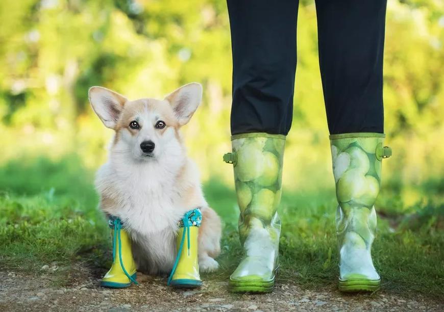 """给狗狗穿鞋,是""""你妈觉得你冷""""的多余之举吗?"""