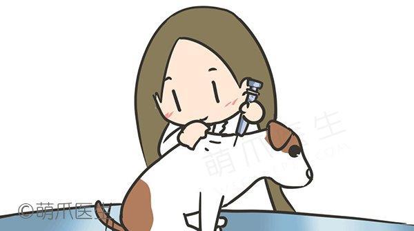 宠物健康微手册:成年篇