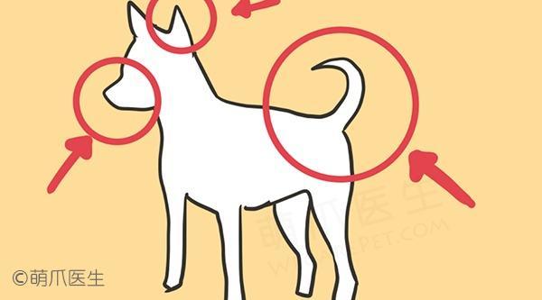 臭狗狗到底臭哪了?