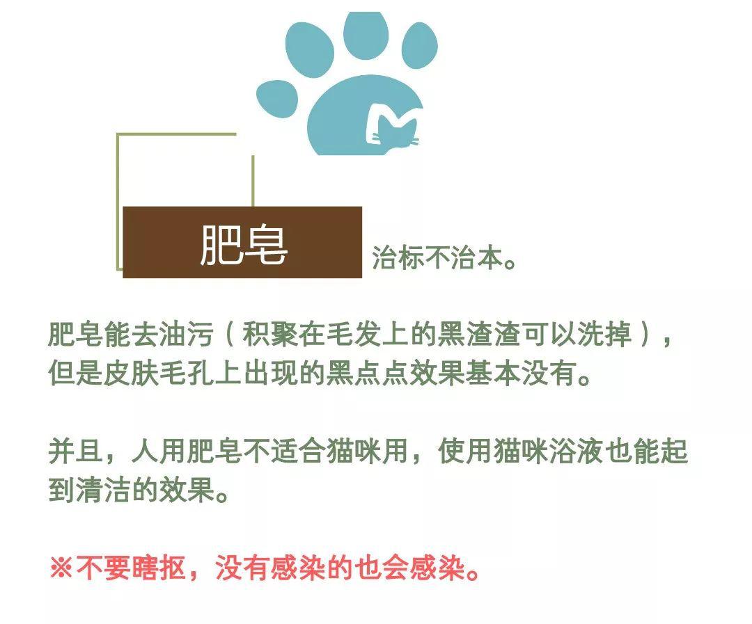 猫猫黑下巴的原因和防治方法