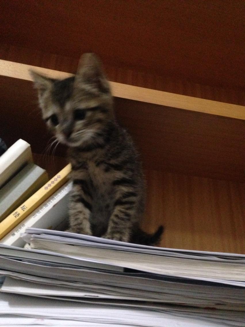 小猫太胆小太戒备怎么办?
