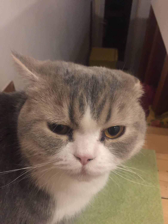 寄养在家长家两天之后发现猫有点秃了
