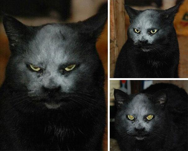 证明猫咪其实是恶魔的几张图……