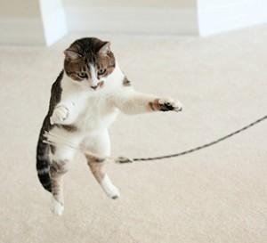 猫咪时间观念