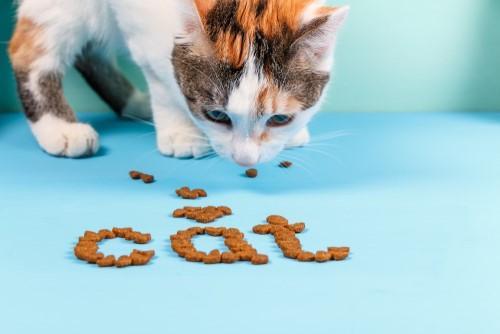科学家都哭了:给猫做实验太难了!