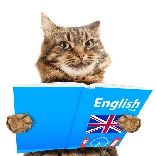 猫到底是不是弱智