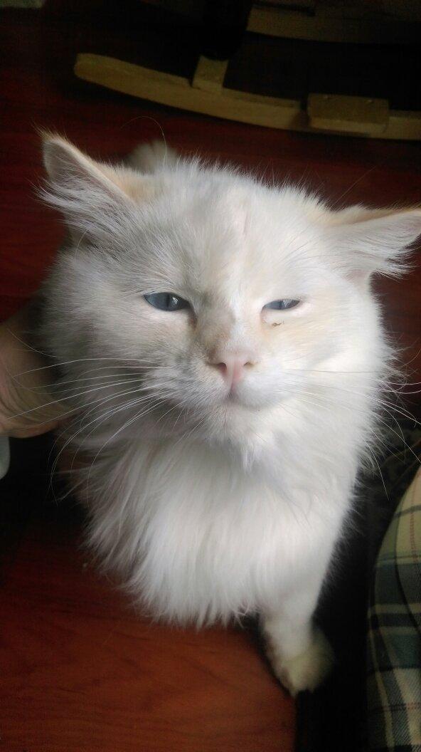 猫猫发烧了