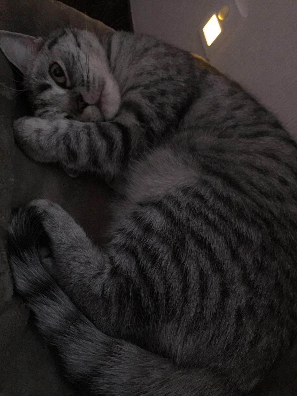 猫猫不粘人
