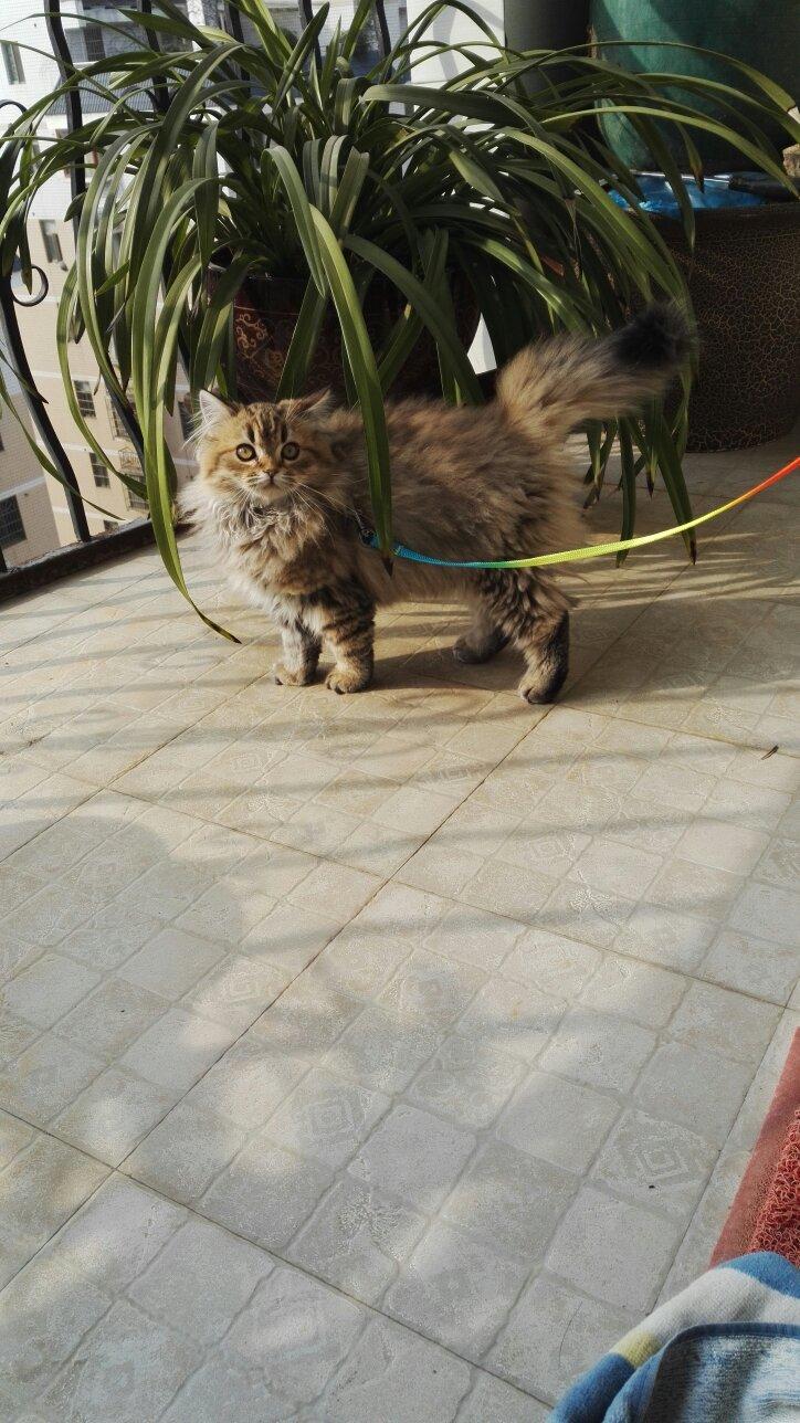 猫咪拉稀软便后食欲锐减。