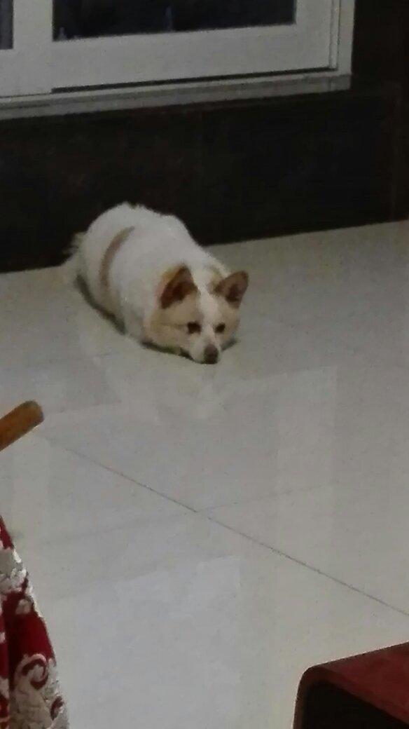 狗忽然在家尿尿