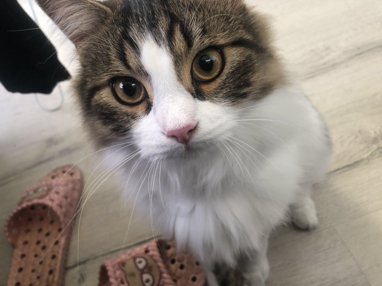 猫咪眼睛很奇怪