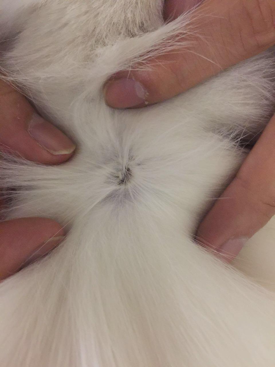 猫咪因为外伤秃了一块儿毛怎么办?