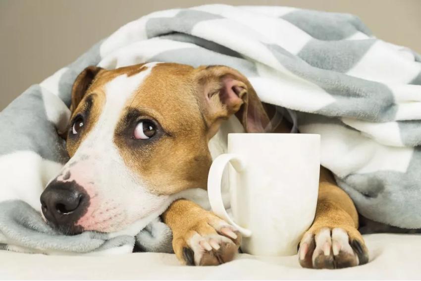 奶猫奶狗常见的疾病有哪些?