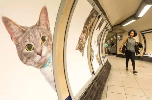 这个地铁已被喵星人攻占
