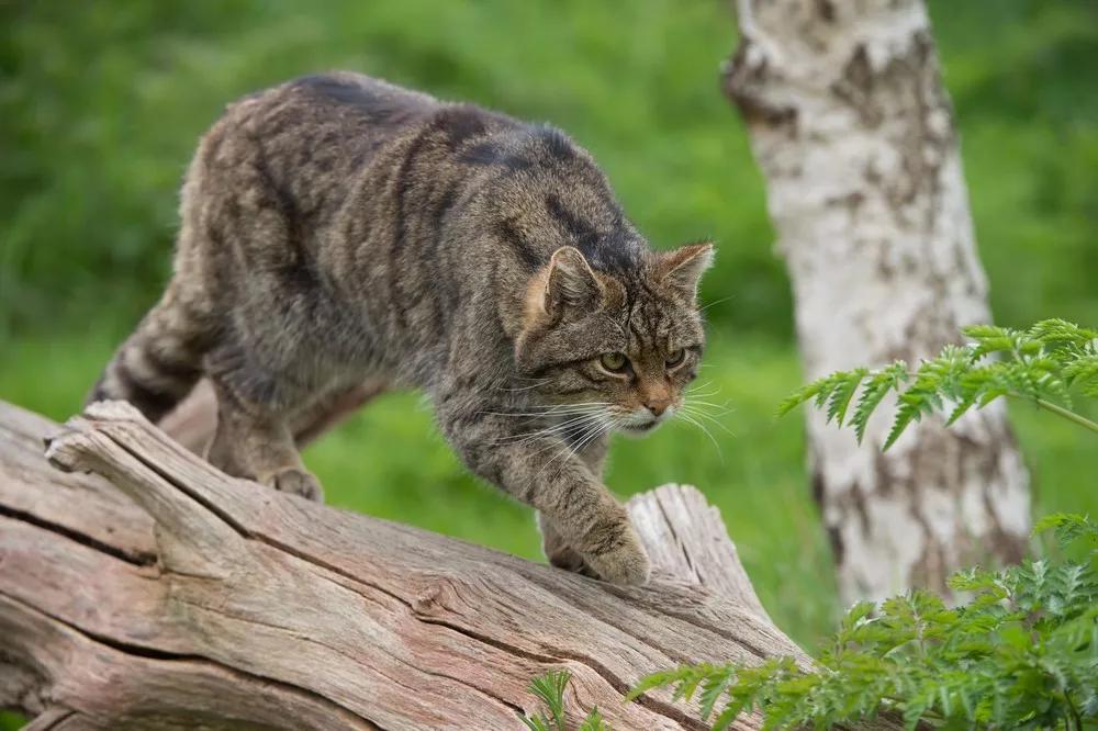 请人类回答:被猫咪驯化是一种什么体验?